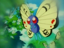 Isole del Pompelmoe Butterfree Orange.png