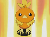 Torchic di Professor Birch