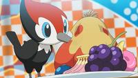 Grande gara Pokémon di cibo Pikipek.png