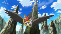 Staraptor di Avian
