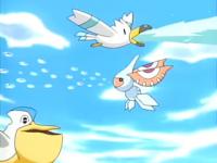 Wingull (×2), Pelipper e Masquerain di Rodolfo