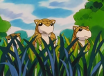 Kanto Route 1 Sandshrew.png