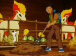 Wings Ponyta Bellsprout.png