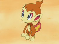 Chimchar di Paul