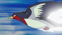 Ash Swellow Attacco Rapido.png