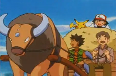 Shellby Tauros.png