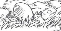 Creatura ovipara