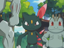 Harrison Sneasel debutto.png
