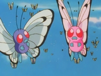 Butterfree Rosa