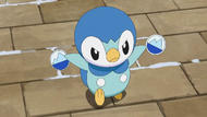 Lory Piplup.png