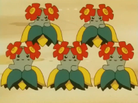 Tammy Bellossom.png