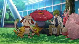 Taddeo Pokémon Team.png