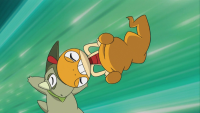Ash Scraggy Bottintesta.png