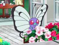 Butterfree selvatico