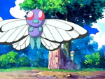 Valle Fennel Butterfree.png