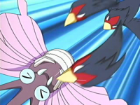 Ash Swellow Beccata.png